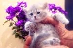 Кошечка редкого окраса